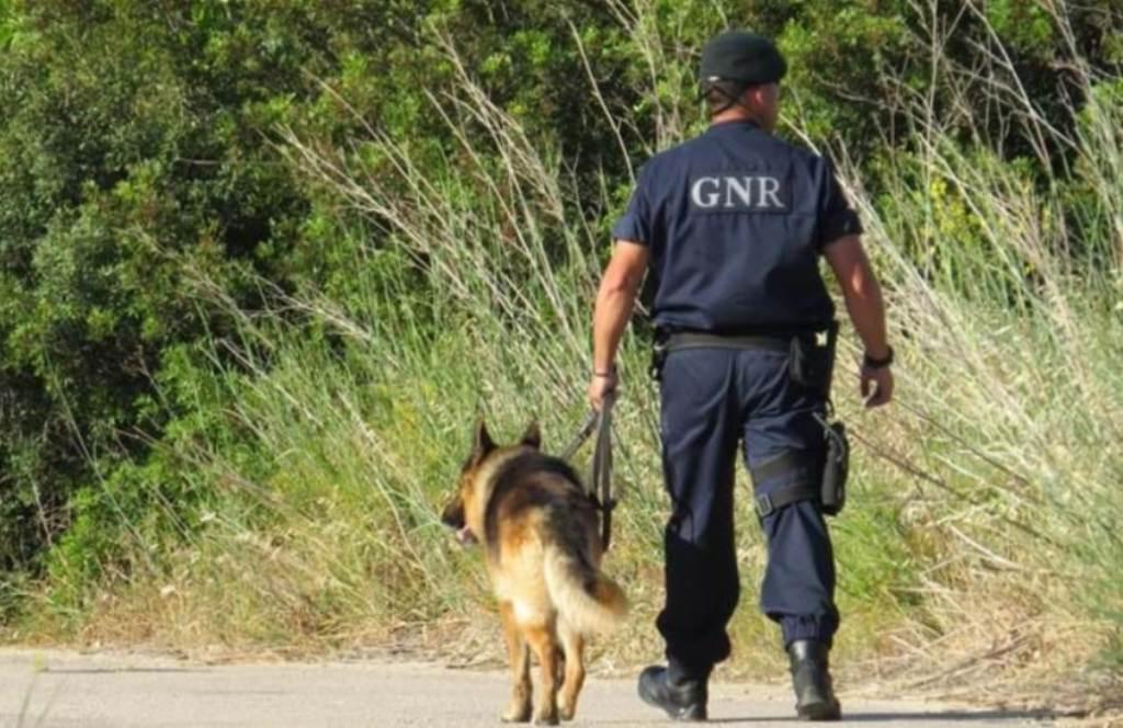 GNR Esclarece Resgate de Animais em Incêndio Florestal em Santo Tirso