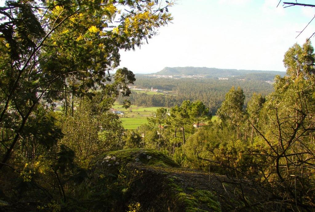 Defesa da Floresta em Discussão Pública