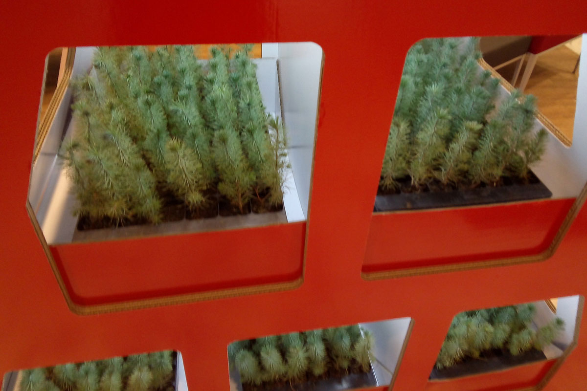 Município ajuda na Reflorestação do Concelho