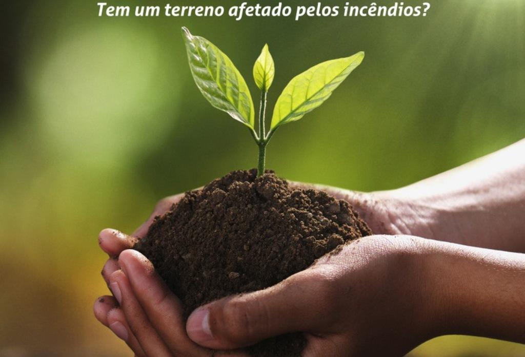 Reflorestação de Terrenos Queimados