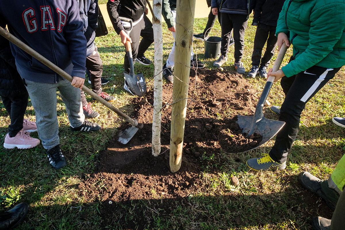 265/Plantação-de-árvores-na-Via-B.jpg