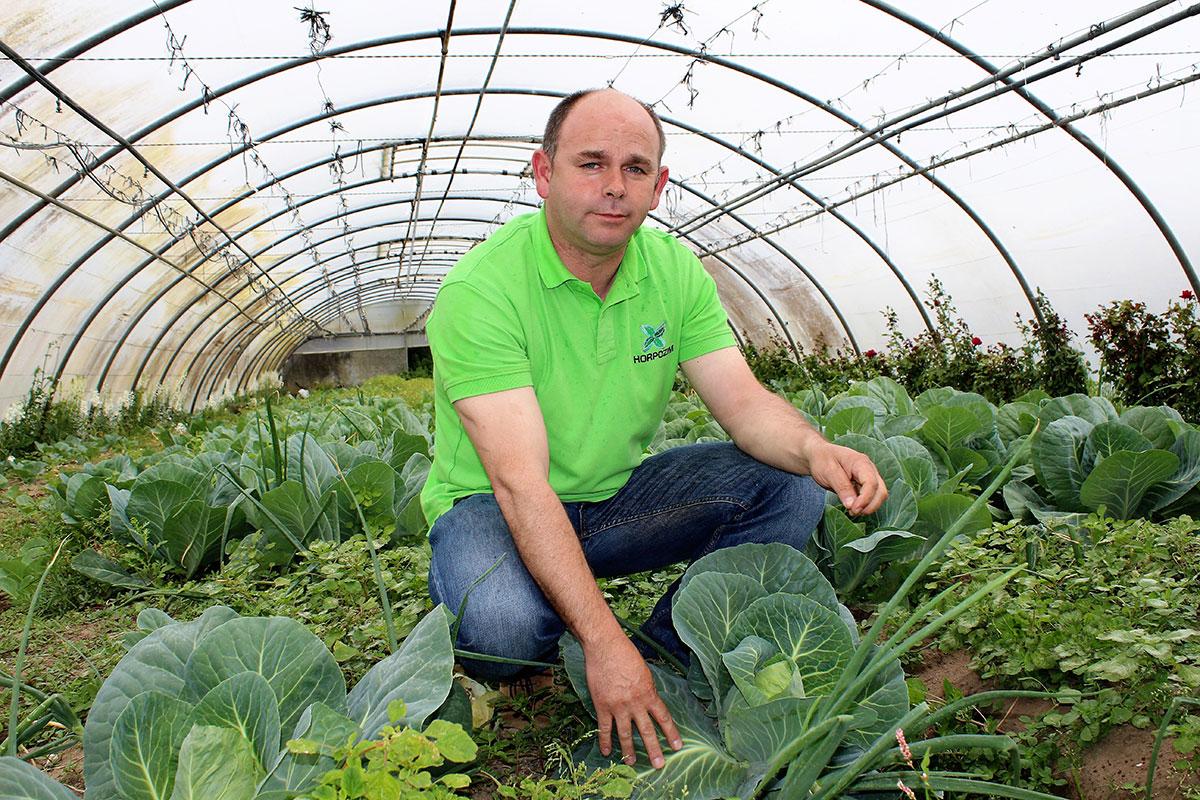 Produtores Poveiros Garantem Abastecimento de Hortícolas