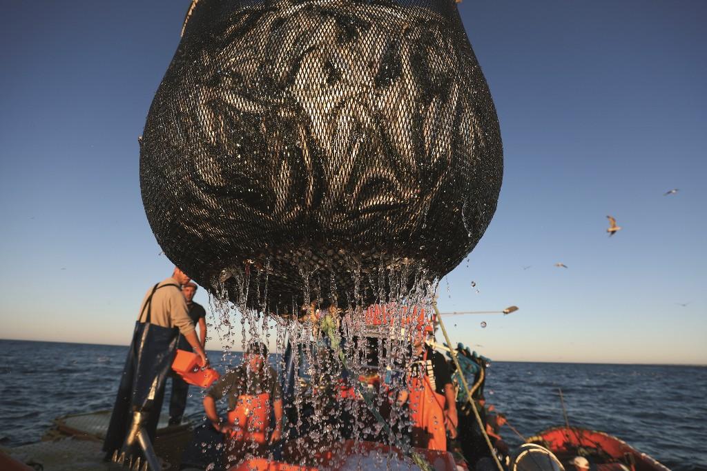 Medidas de proteção nas Pescas e Aquicultura Recebem Apoios Contra a Covid-19