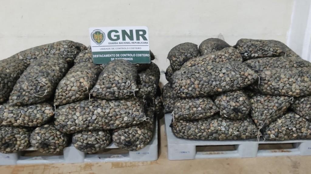 Uma Tonelada de Bivalves Confiscada pela GNR na A28