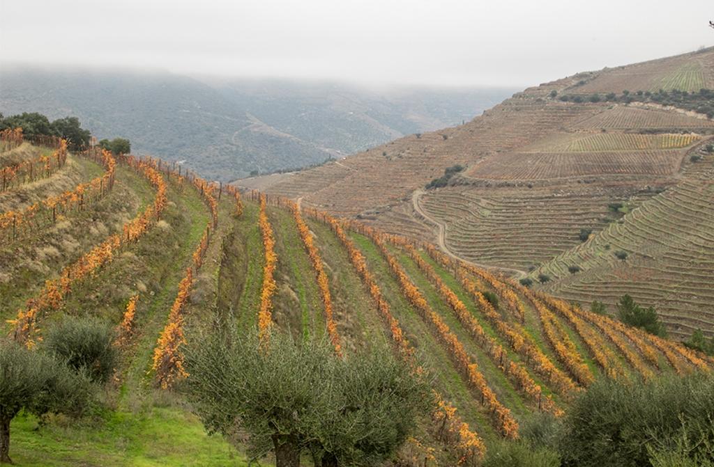 Reforçadas Medidas Excepcionais de Apoio ao Sector dos Vinhos