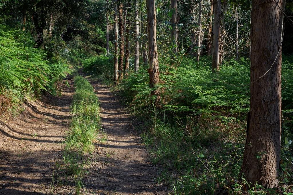 Terrenos Florestais Devem ser Limpos até 15 de Março