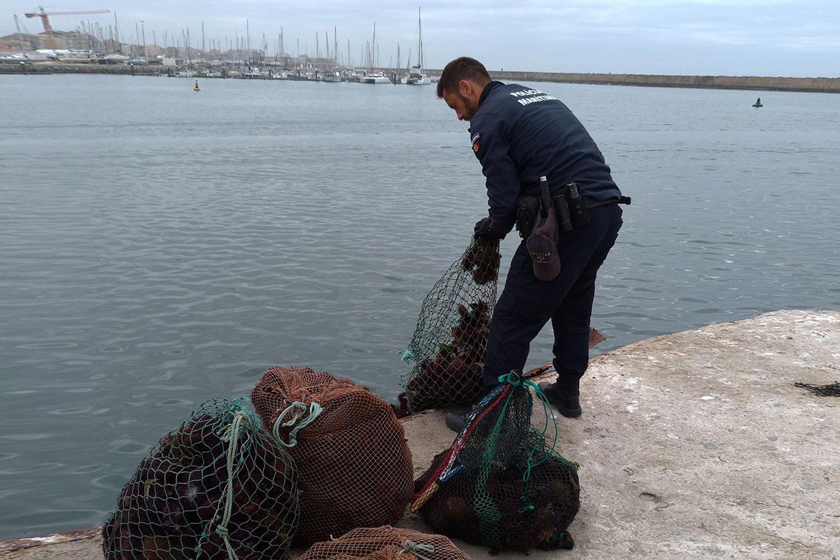 Polícia Marítima Fiscaliza Apanha de Ouriços
